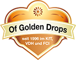 Of Golden Drops - Cairn und Border Terrier-Zucht